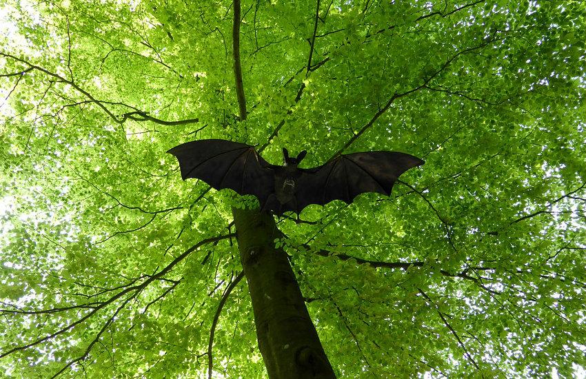 Los murciélagos son portadores de numerosos virus en nuestra región, según el estudio | Fotografía: mnanni en Pixabay | Usada bajo licencia Creative Commons