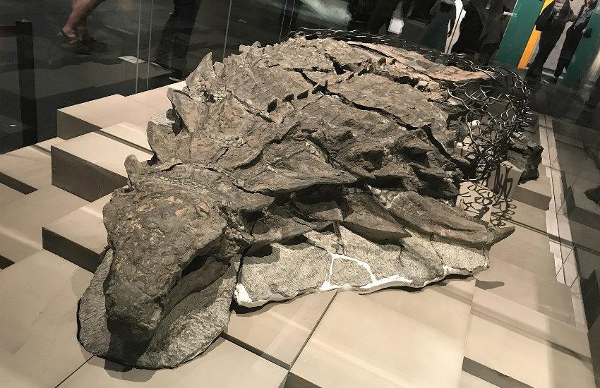 ¿Es real esta fotografía de un dinosaurio momificado?... ¡Responde nuestro quiz de noticias!