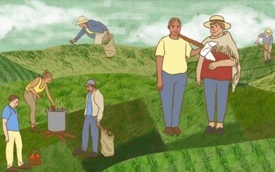 Ilustración de la historia de soluciones sobre huertas caseras en Cajamarca (Tolima), Colombia. Ilustración: Rowena Neme.