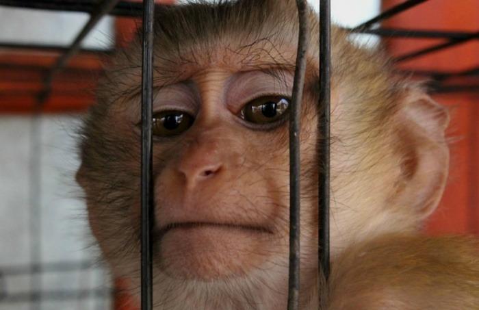 ¿Es auténtico el video de un simio que es torturado en experimentos con cosméticos L'Oreal?… ¡Responde el quiz de noticias!