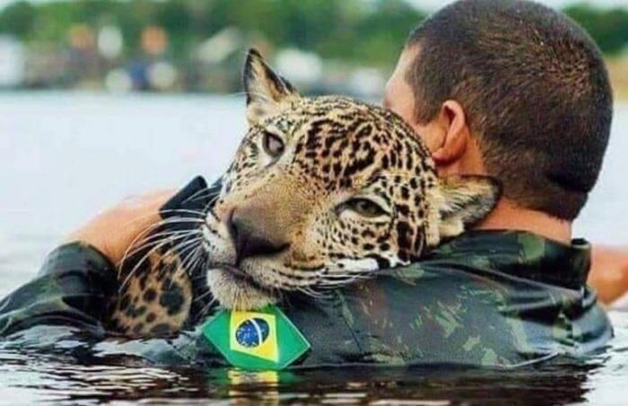 ¿Es real esta imagen de un jaguar salvado de los incendios en la amazonía brasileña?... ¡Responde nuestro quiz de noticias!