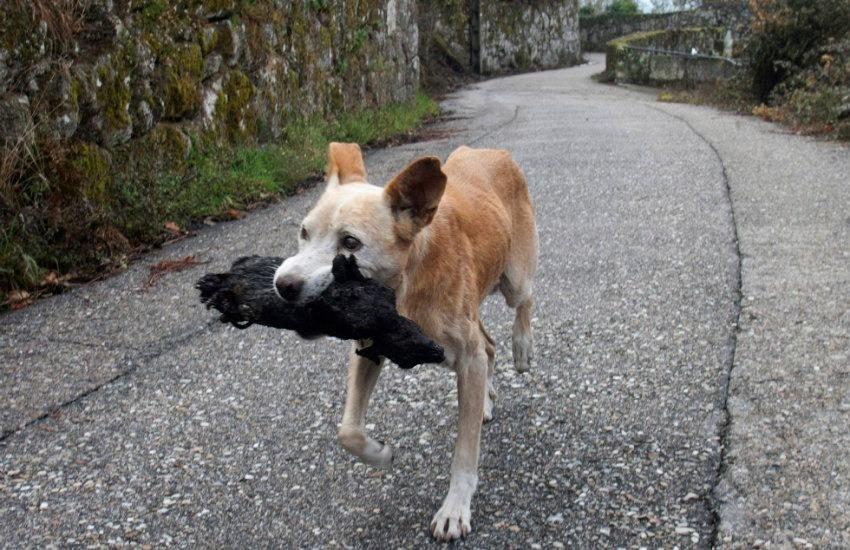 ¿En realidad esta foto muestra a una perrita rescatando los cuerpos calcinados de sus cachorros tras los incendios en España?... ¡Responde nuestro quiz de noticias!