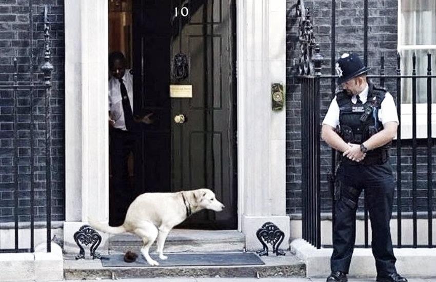 ¿Es auténtica esta fotografía de un perro frente a la residencia del primer ministro británico?... ¡Responde nuestro quiz semanal de noticias!