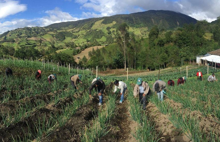 Foto: Camilo Vargas/ FAO Colombia.