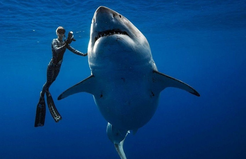 ¿Es real o un montaje esta fotografía de buzos con un enorme tiburón blanco?... ¡Responde nuestro quiz de noticias!