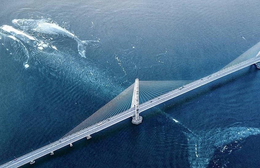 ¿Es real esta fotografía de una enorme ballena pasando bajo el puente Champlain en Montreal?... ¡Responde nuestro quiz de noticias!