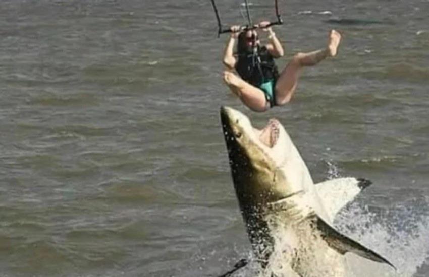 ¿Es real esta foto de un tiburón atacando a un turista?... ¡Responde nuestro quiz de noticias!