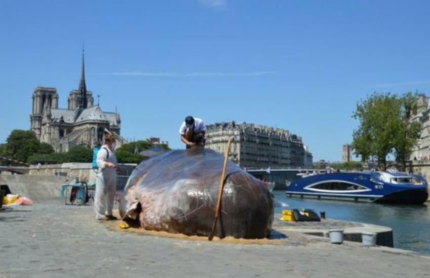 ¿Es cierto que una ballena apareció varada en las orillas del Sena?... ¡Responde nuestro quiz semanal de noticias!