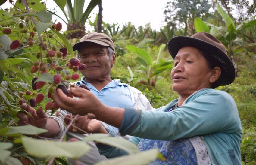 Foto: Cortesía FAO Colombia.