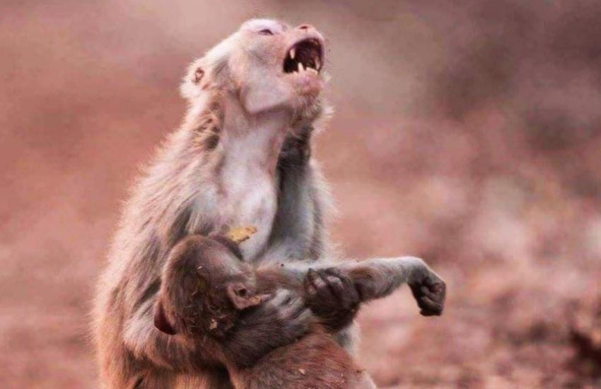 ¿Esta fotografía muestra el sufrimiento de los animales afectados por incendios en la Amazonía?... ¡Responde nuestro quiz de noticias!